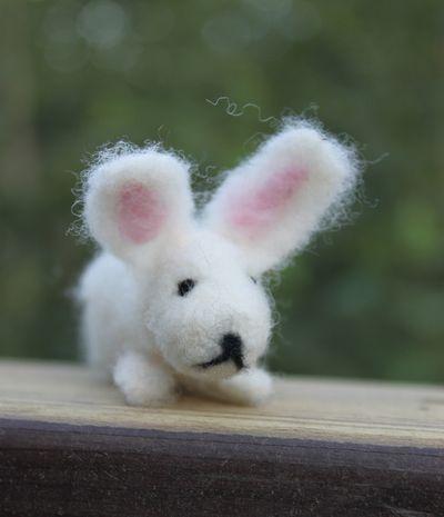Bunny 2 072411