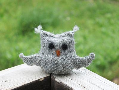 Little Lopi Owlet