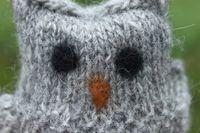 Owlet closeup of face