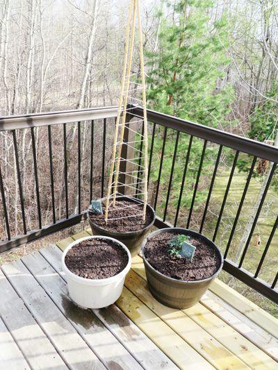 Deck garden 051814