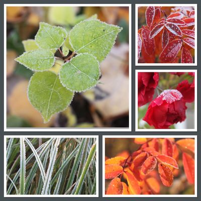 Frost collage 100515