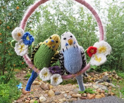 Budgies front 080515