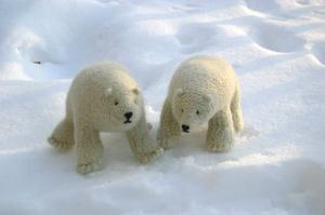 Polar_bears_in_situ_121006