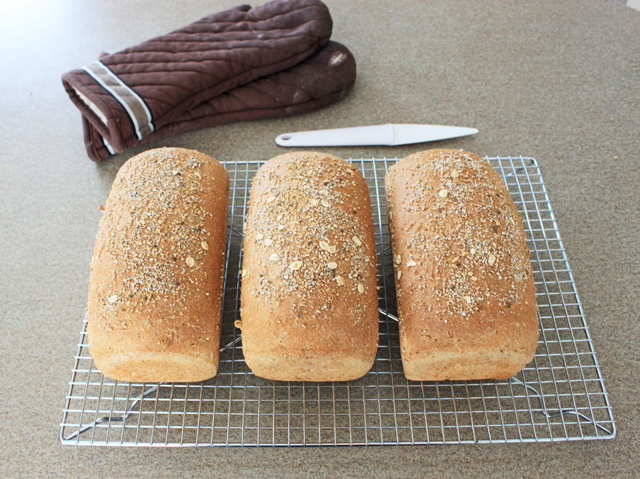 Whole wheat bread, April 15