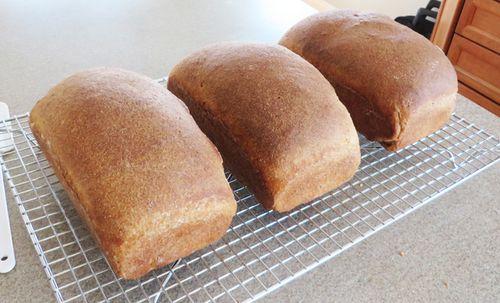Whole Wheat Bread, January 10